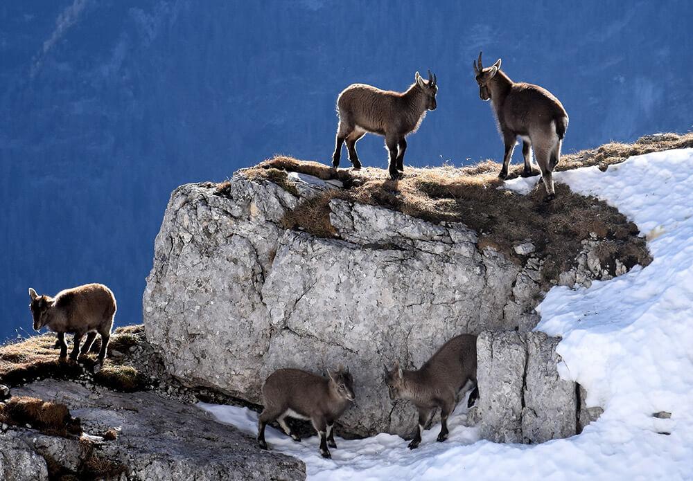 4000 ettari di area alpina protetta